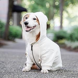 cute white dog hoodie