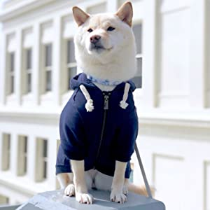 dog navy hoodie