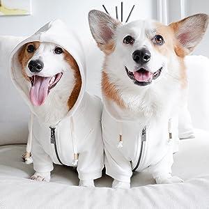 white dog hoodie