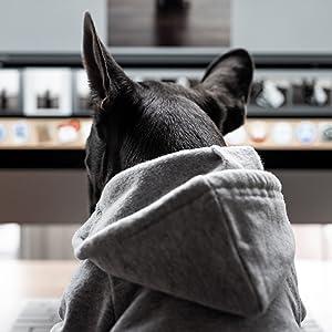 ellie dog wear hood