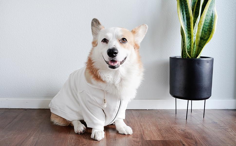 ellie dog wear white dog hoodie main
