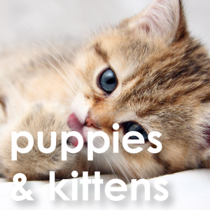 puppies kittens puppy health intestinal gut natural remedy nutrition