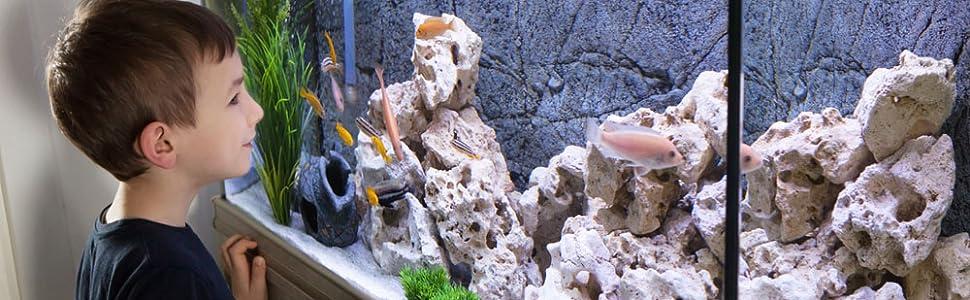 boy, fish tank
