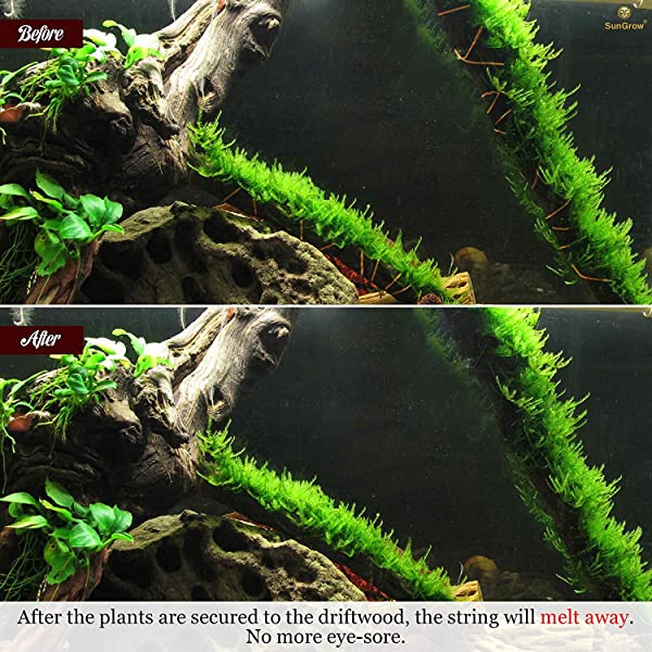 10 x Driftwood String Blends Naturally with Cholla Ideal for Tying Java Fern
