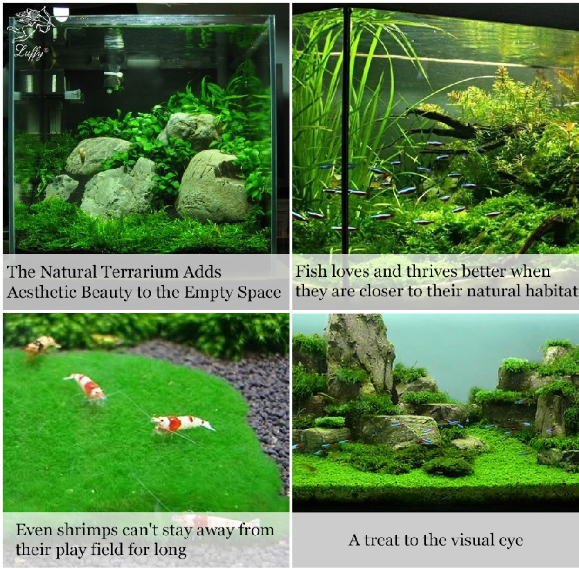 Christmas Moss Carpet.Luffy Decorative Aquatic Moss Wall Floor Mesh Kit Create A Lush Living Plant Moss Wall Or Moss Carpet For Your Fish Tank Plant Not Included