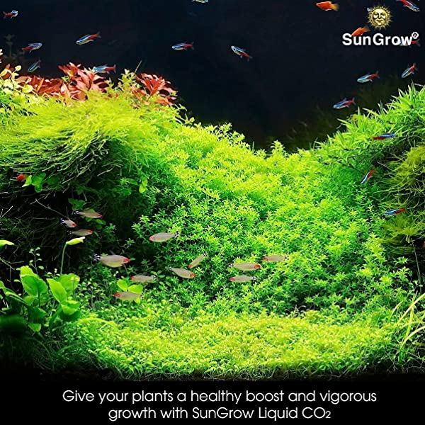 Amazon com : SunGrow Easy CO2 - A Must Have Product For