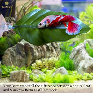 why does your betta need a bed  amazon     3 leaf hammocks for betta fish    lightweight and      rh   amazon