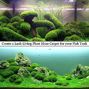 Christmas Moss Carpet.Details About Luffy Wild Christmas Moss Loose Form Aquarium Decor Shrimp Fry Food For Fish