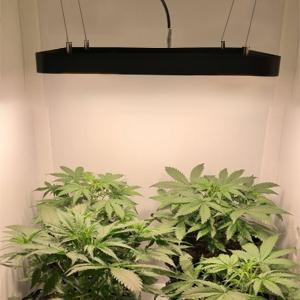 blacksun-s4 grow lights for indoor plants