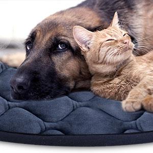 Amazon.com: Colchón antideslizante lavable para perros ...