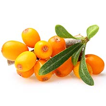 Small cluster of Sea Buckthorn berries, a skincare antioxidant, on branch.