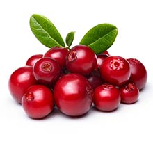 Cluster of Lingonberry berries, a skincare antioxidant.