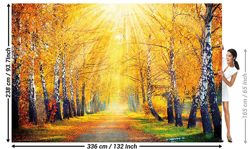 Decoration Birch Forest Nature Landscape Tree Avenue Path Autumn Sun ...