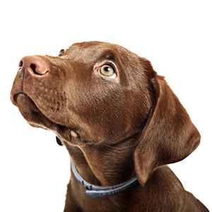 HAEOR Flea Collar and Tick Control for Dogs