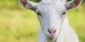 capra colostrum goat milk powder immune function supplement baby infant formula recipe antibodies