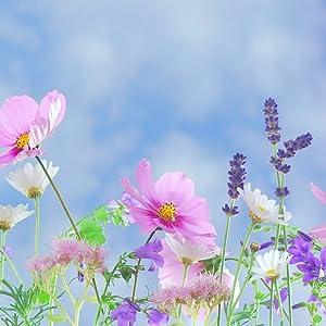 Flowers grown in organic soil