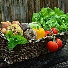 Vegetables grown in organic soil