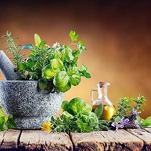 Herbs grown with organic soil