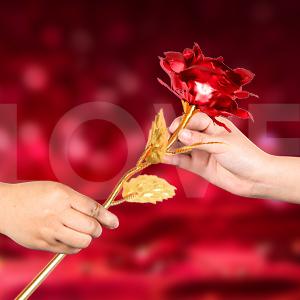 Rose flower for her gift