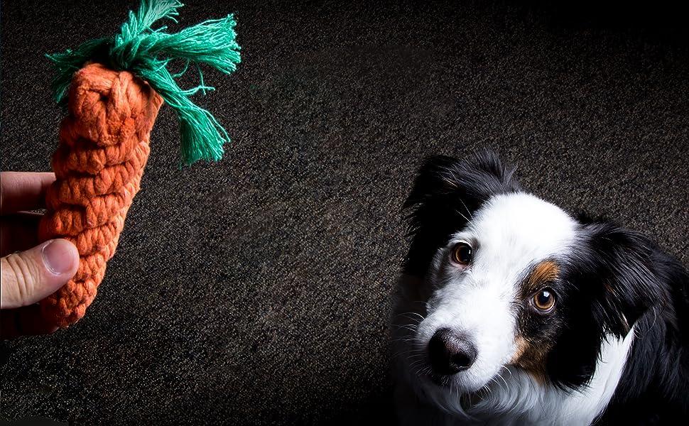 No conocerás el verdadero amor de los cachorros hasta que tu perro vea este kit de 11 piezas de juguetes para perros: 11 divertidos juguetes para cualquier ...
