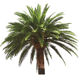 VG Palm Tree