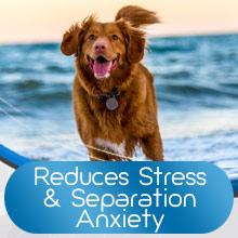 dog calming treats calming dog treats calming dog calming collar dog vest for anxiety bark bone