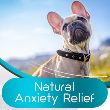 calm for dogs calm treats for dogs dog sleep aid quiet moments calming aids for dogs collar for dogs