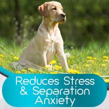 calming spray for dogs dog thunder shirts dog pheromone diffuser pheromone collar for dogs hyper pet