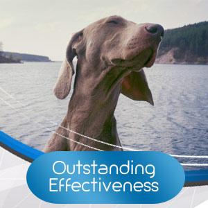 dog anxiety jacket pill treats dogs calming collar thunder shirt thundershirt for dogs calm relief