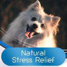 dog calming chews for dogs anxiety dog calming dog calming aid calming treats for dogs
