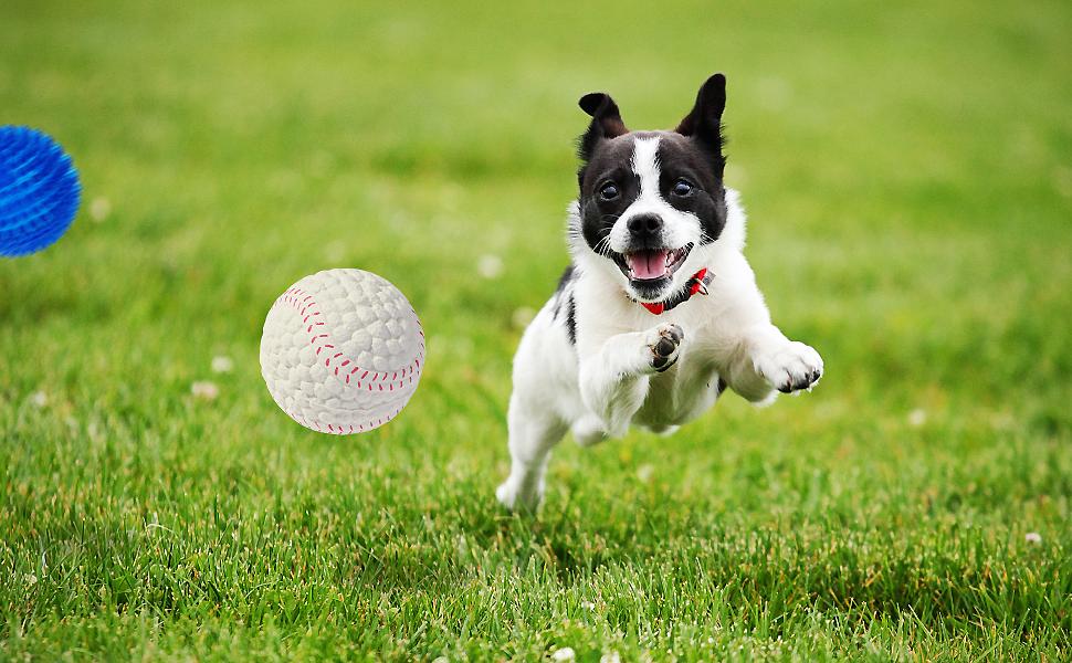 dog ball08