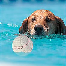dog ball 04