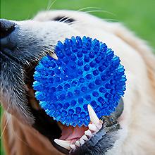 dog ball 07