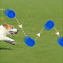 dog ball06