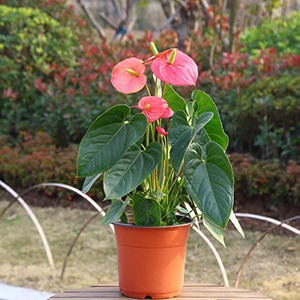 Flower Plant Container Seed Starting Pots