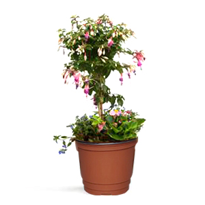 Plastic Plants Nursery Pot
