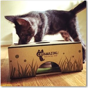 Amazoncom CAT AMAZING Best Interactive Cat Toy Ever Treat - 22 awesome pieces furniture every cat owner will love