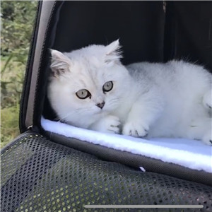 car carrier for cats