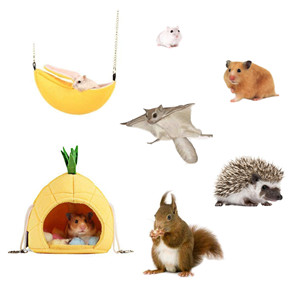 pineapple amp; banana hammock are next to hamsters, sugar glider, hedgehogs and squirrels