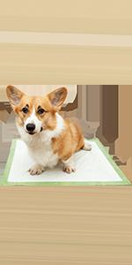 Amazon.com: Pogis Poop Bags - Bolsas de basura para perros ...