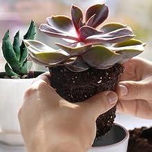 Easy Planting