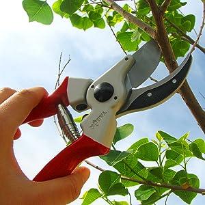 cutting branch