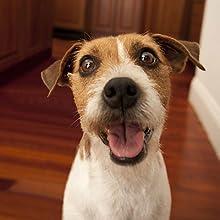 pet camera, treat camera, dog camera