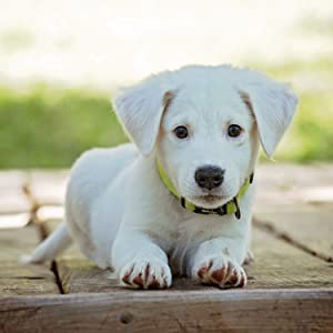beautiful little white dog sitting on a deck