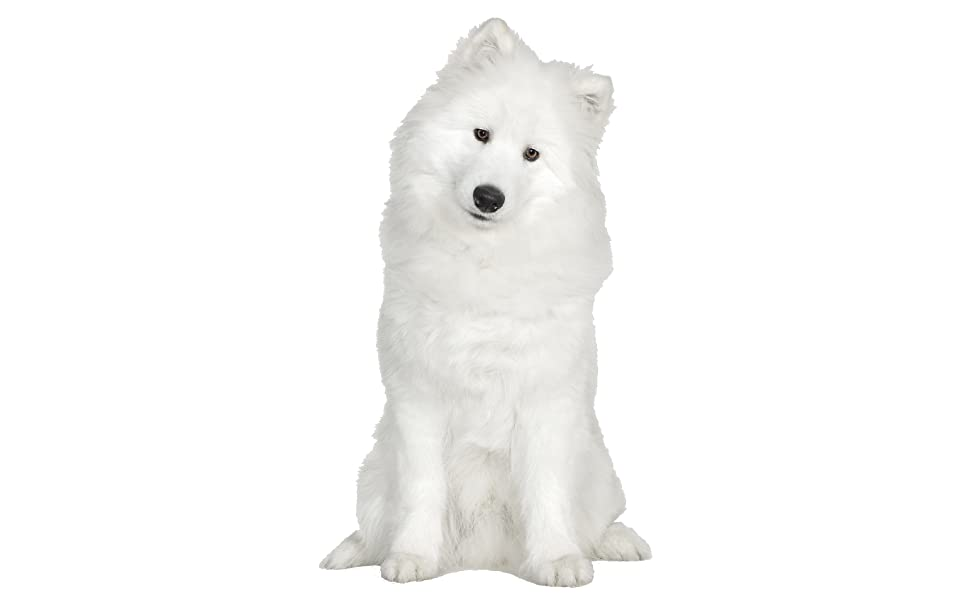 white dog sitting down staring at the camera with a white background