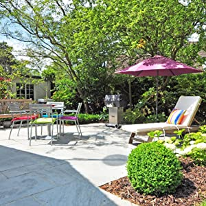 down to earth trees shrubs plants outdoors backyard growing season sunshine healthy plants blossom