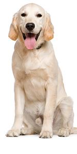 dog cones for large dog, dog neck collar