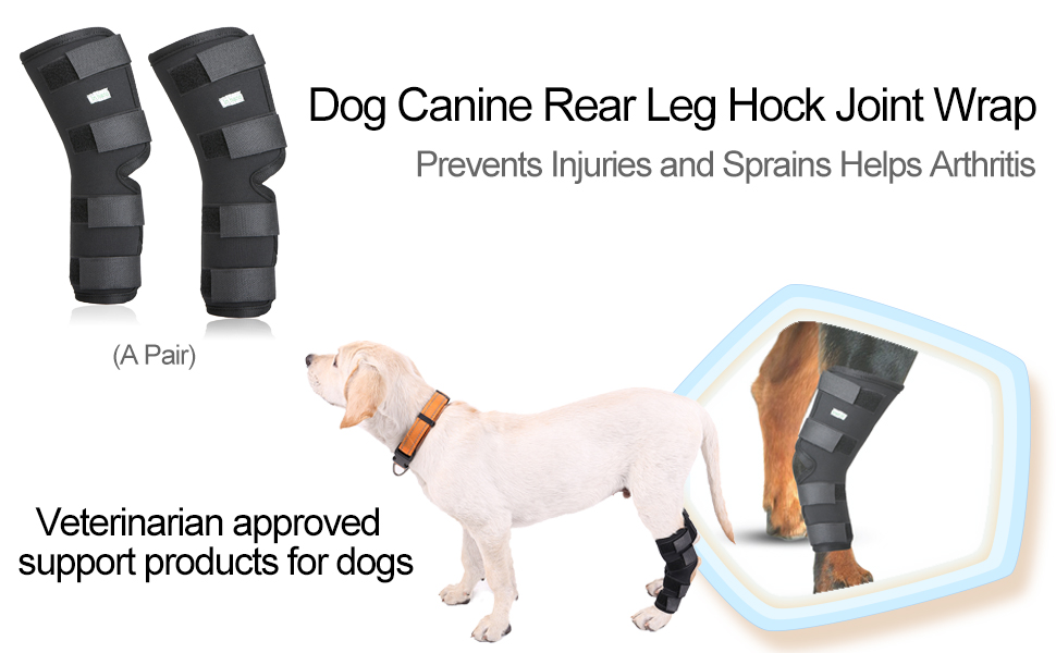 c7300f6ba6 ○IN HAND Leg Brace for Dogs is a neoprene compression brace which provides  stability and support to the rear hock joint without compromising  flexibility.