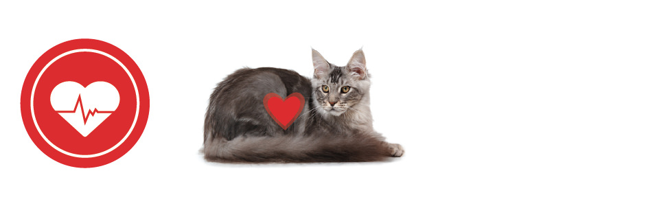 Saludable para su gato