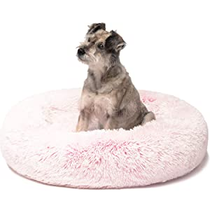 dog pet cat cute petlover friends forever bed furniture